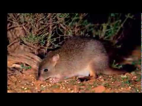 Snapshot Of Endangered Australian Animals