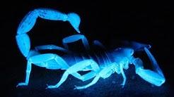 Scorpion Pest Control Queen Creek AZ- 480-493-5028 | Ozone Pest Control