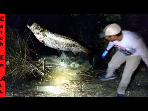 TARPON FISH JUMPS On SHORE And CRUSHES EVERYTHING!