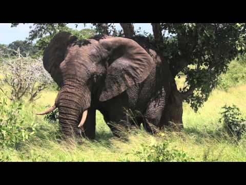 Kruger National Park, Blyde River Canyon, Zanzibar