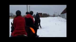 Зимняя конная прогулка. Эквилого, МО, Киевское шоссе.(Я назвала данный видеосюжет