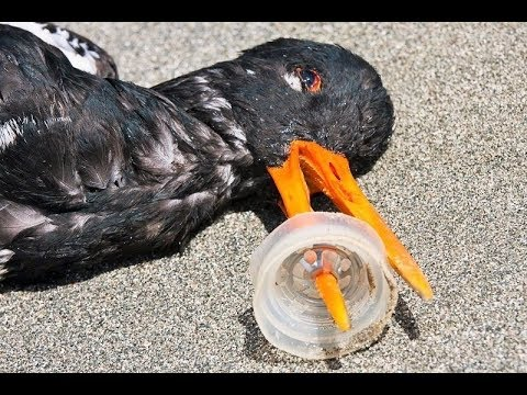 15 Horrific Suffering to Animal Cause Our Plastic Waste