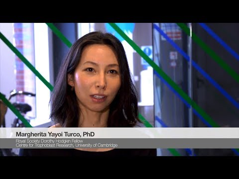 3d Cell Culture And Analysis: Thoughts From Dr. Margherita Yayoi Turco