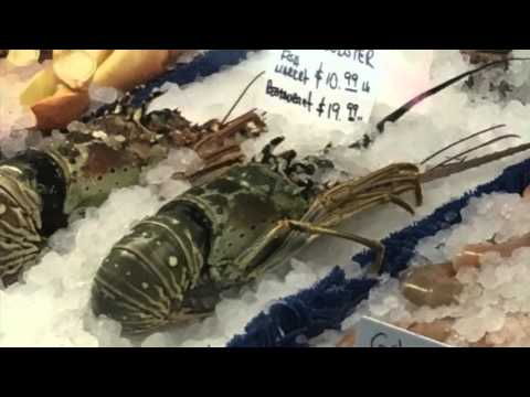Marine Science Project Seafood Watch