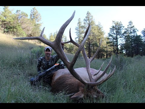 New Mexico Archery Elk Hunt - Full Hunt