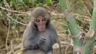 Удивительная природа, дикие животные Тайваня. #Документальный фильм. National Geographic