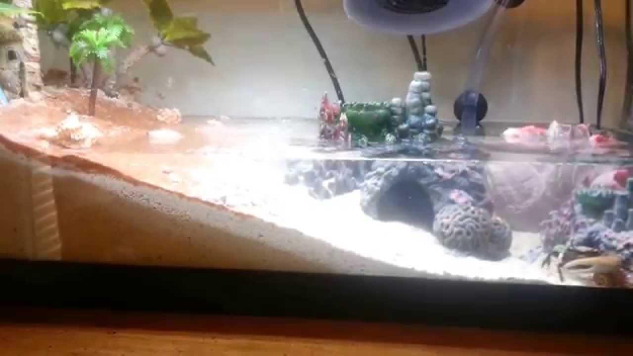 Fiddler Crab Tidal Aquarium - YouTube