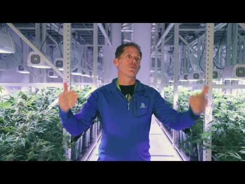 Cannabis Mobile Racking Storage by Montel Inc