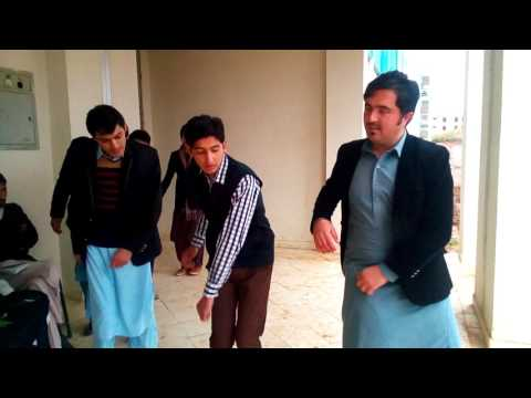 hazara University Botany Department Attan