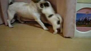 子離れ出来ないMommy犬。 子犬強い! http://sumitani.jugem.jp/ They a...