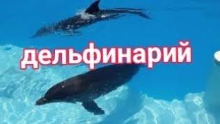 Шарм эль Шейх 2020 Август Дельфинарий и немного другого