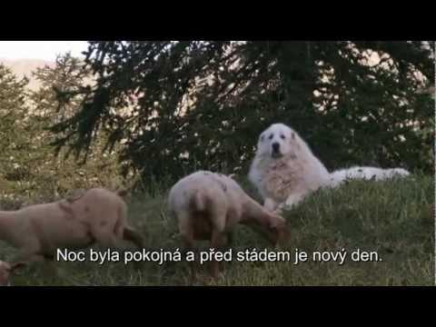 Hlídači našich stád - pastevecký pes