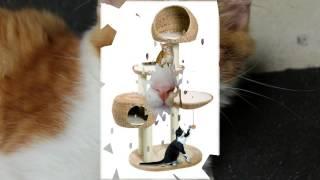 домик для кошки купить