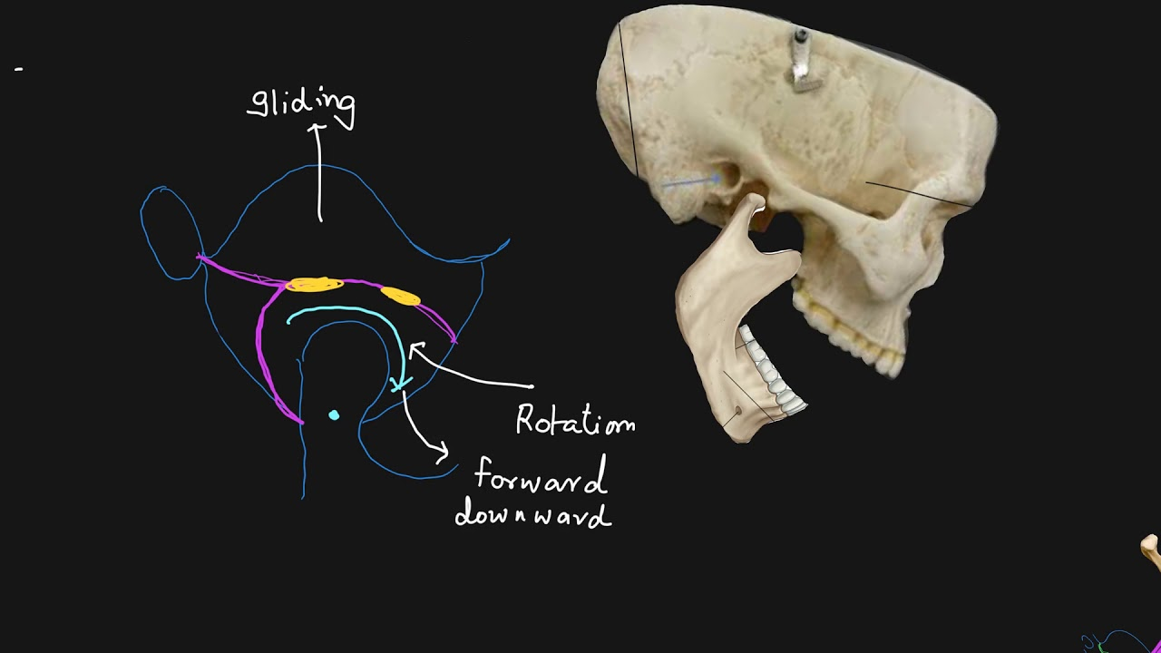 jaw joint 2 -movement and applied anatomy - YouTube