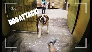 DOG ATTACK while I was doing Parkour in India!