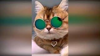 Лучшие приколы с животными 2019 январь #11. Смешные коты собаки и кошки. Приколы с котами 2019