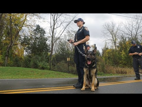 Police Dog: Training your best friend