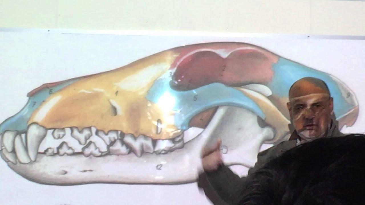 Clase Anatomía Canina (12-09-2015) Parte 1 - YouTube
