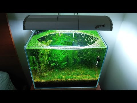 6 Months Update – (Population Explosion) NO filter, NO CO2, NO Ferts 5 Gallon Nano Tank