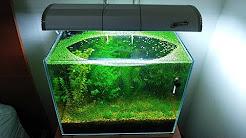 6 Months Update - (Population Explosion) NO filter, NO CO2, NO Ferts 5 Gallon Nano Tank