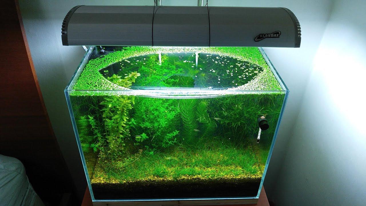 6-months-update-population-explosion-no-filter-no-co2-no-ferts-5-gallon-nano-tank