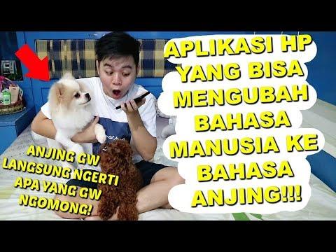 ANJING GW OLAF Sekarang Bisa BAHASA MANUSIA?! **not clickbait**