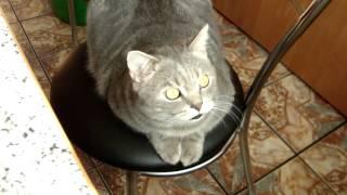 Крутое видео. Кот смеется!