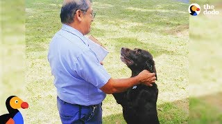 Dog Can't Wait To See His Mailman Every Single Day | The Dodo