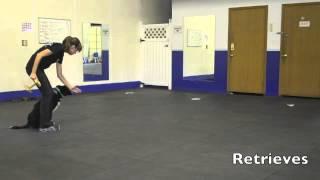 Dog Training Video Resume - Basic