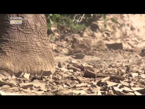 Hd lebende wüste namibia doku