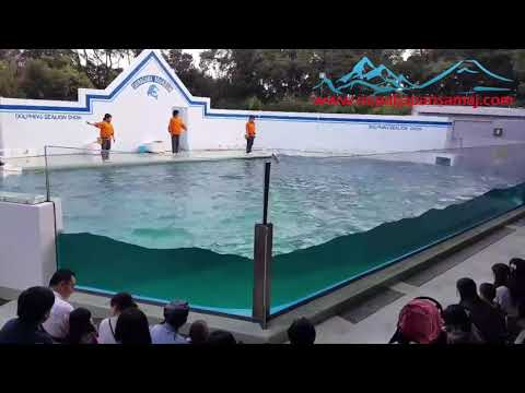 Dolphin Show of jump with power at Shinagawa Aquarium