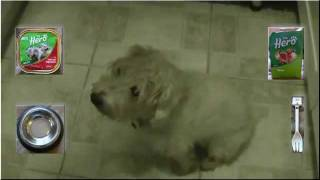 Instructional Writing - Feeding Your Dog