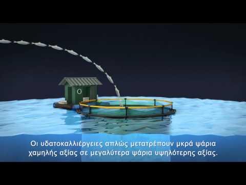 Ending Overfishing-Greek Subtitles