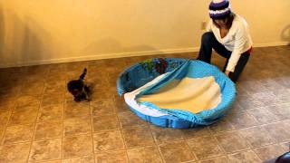 Whelping Pool Cover.mov