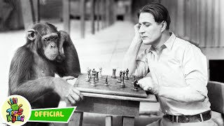 Những Chú Khỉ Thông Minh Và Nổi Tiếng Nhất Trên Thế Giới - Tốp 5 Kỳ Thú