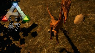 MINI DINOS WOLLEN UNS TÖTEN - Let's Play ARK Survival Evolved #7 | Indie Game