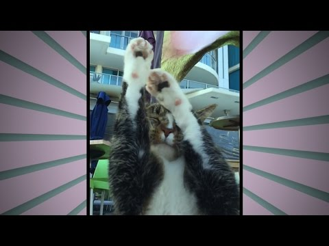 Cats Non-Reaction is PRICELESS! Go Didga! (slow motion)