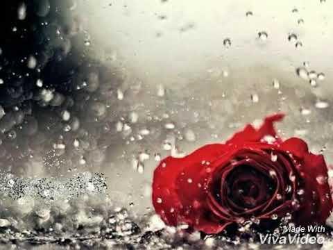Fatin Husna terlepas cinta(Lirik)