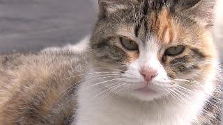 Котов все чаще стали брать на работу