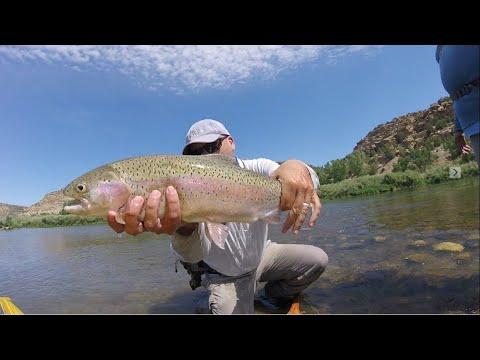 SubtleTakes, Fly Fishing The San Juan River 2017