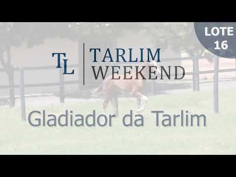 Lote 16 - Gladiador da Tarlim (Potros Tarlim)