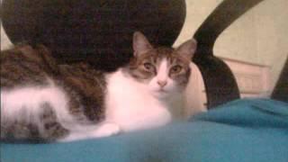 Лютая кошка-Люто смотрит в камеру