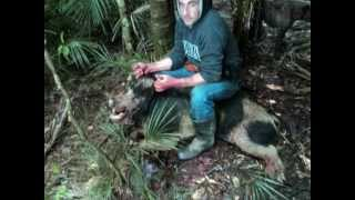 pig hunts far north aotearoa nz0001.wmv