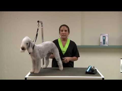 Bichon Frise Grooming Video Funnydog Tv