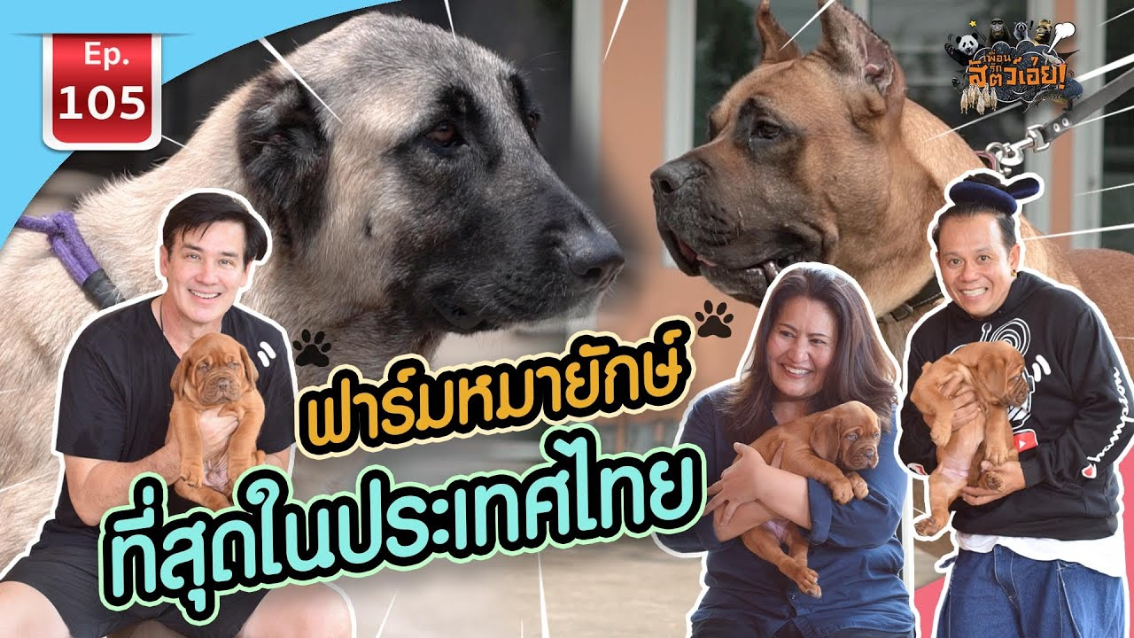 ฟาร์มหมายักษ์ที่สุดในประเทศไทย - เพื่อนรักสัตว์เอ๊ย EP.105