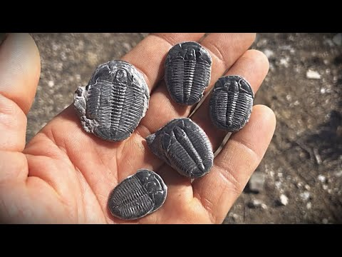 Fossil Digging For 500 Million Year Old Trilobites In Utah
