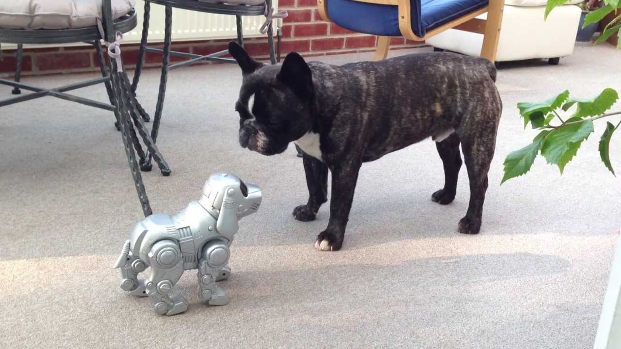 how did sandy meet frenchie dog