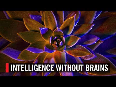 Intelligence Without Brains