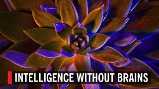 Intelligence Without Brains