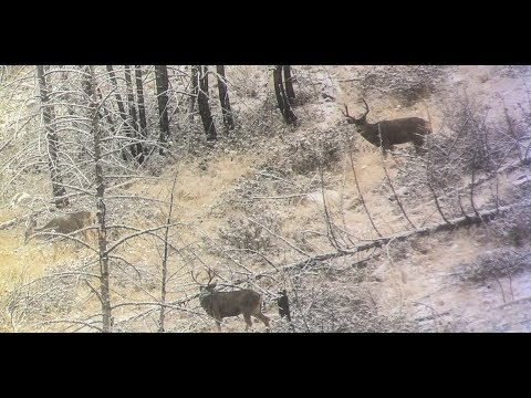 SO MANY BUCKS Washington Late Rifle Mule Deer Hunt Part 1